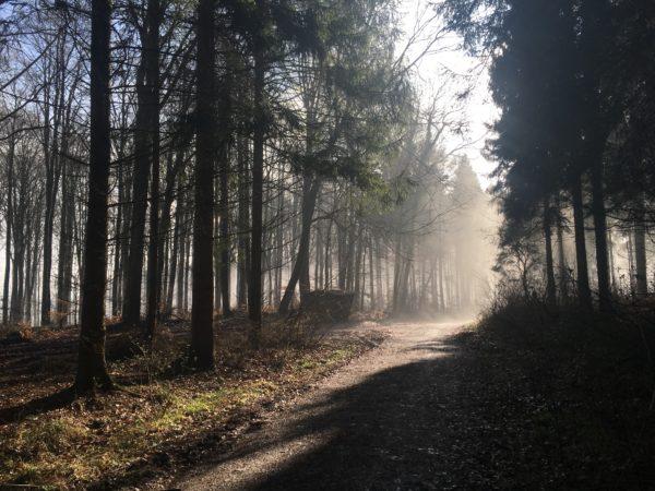 Waldweg mit Morgennebel und Sonnenstrahlen zwischen den Bäumen